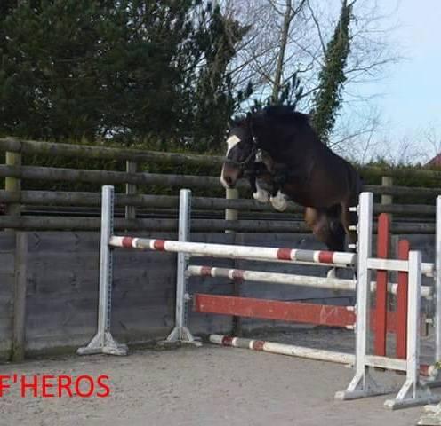 F Heros